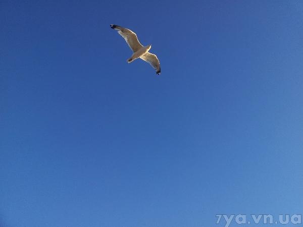 Чистое небо удачный кадр