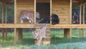 Дружба тварин