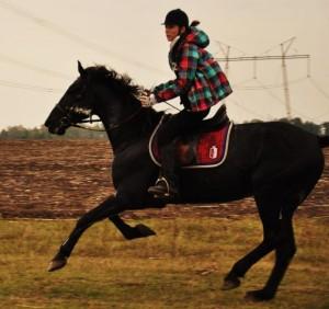 Покататись на конях у Вінниці